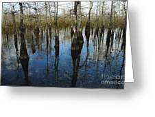 Reflections At Big Cypress Greeting Card
