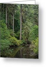 Reflections In Silver Falls State Park Greeting Card