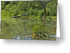 Reflections In The Pond Greeting Card