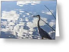 Reflections Of A Bird Greeting Card