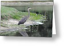 Reflections Of A Blue Heron Greeting Card