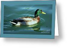 Reflections From A Mallard In Omaha Greeting Card