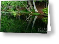 Reflections Of A Forest Greeting Card