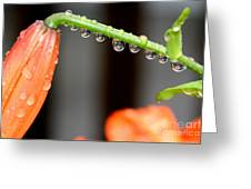 Reflections Of A Lily Greeting Card