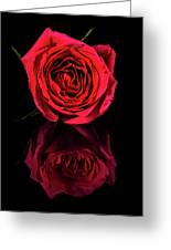 Reflections Of A Red Rose Greeting Card