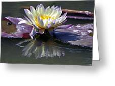 Reflections Of Beauty Greeting Card