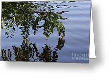 Reflections Of Life Greeting Card
