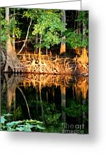 Reflections Of Our Roots Greeting Card