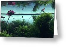 Reflections Of Waterlii Greeting Card
