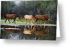 Reflections Of Wild Horses In The Salt River Greeting Card