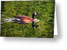 Reflections - Swimming Goose 003 Greeting Card