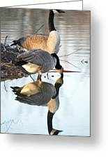 Reflective Geese Greeting Card