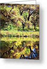 Reflective Live Oaks Greeting Card