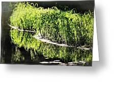 Reflective Shorelines Greeting Card