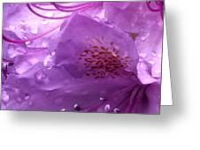 Refreshing Rain Close Up Greeting Card