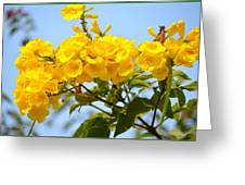 Refreshing Yellows Greeting Card