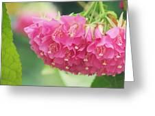 Refreshingly Pink Greeting Card