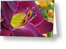 Regal Beauty Greeting Card