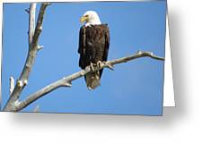 Regal Eagle Greeting Card