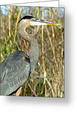 Regal Heron Greeting Card