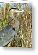 Regal Heron Greeting Card
