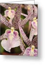 Regal Orchids Greeting Card