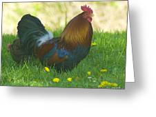 Regal Rooster Greeting Card