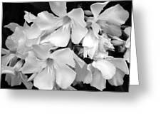 Regal Splendor Greeting Card