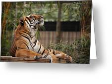 Regal Tiger Greeting Card