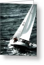 Regatta Sailboat Races Greeting Card
