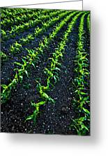 Regimented Corn Greeting Card