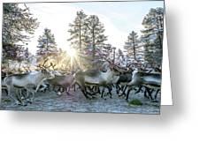 Reindeer On Autumn Sun Greeting Card