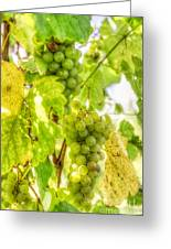 Riesling Harvest IIi Greeting Card