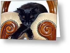 Relaxed Black Cat Sleeping Between Two Chairs Greeting Card