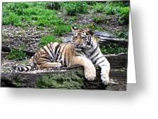 Relaxed Tiger Cub Greeting Card