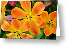 Relaxed Tulips Greeting Card