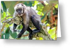 Relaxing Capuchin Monkey Greeting Card