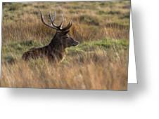 Relaxing Deer Greeting Card