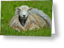 Relaxing In The Pasture Greeting Card
