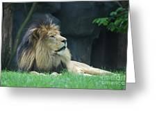 Relaxing Lion With A Thick Black Fur Mane Greeting Card