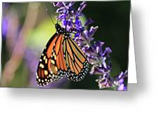 Relaxing Monarch Butterfly Greeting Card