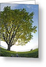 Relaxing Under A Tree Greeting Card