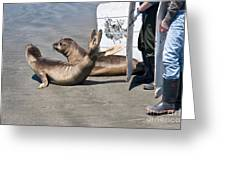 Releasing Elephant Seals Greeting Card