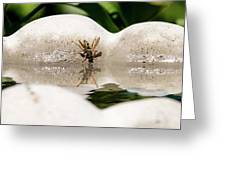 Reflected Little Stinger Taking A Sip By Chris White Greeting Card
