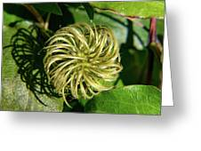 Remainder Of A Clematis Blossom Greeting Card