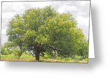 Remember The Trees Greeting Card
