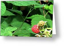 Remembering One Sweet Rasberry Greeting Card