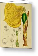 Remusatia Vivipara Xxx Greeting Card