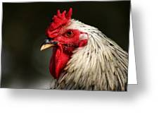 Renegade Rooster Greeting Card