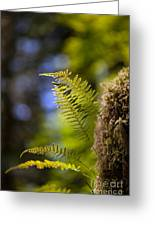 Renewal Ferns Greeting Card by Mike Reid